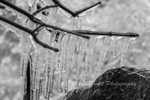 Black and white photo of icicles from a tree branch over a rock
