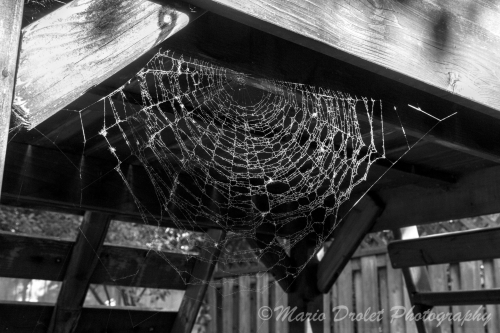 Spider web under a playground in black and white