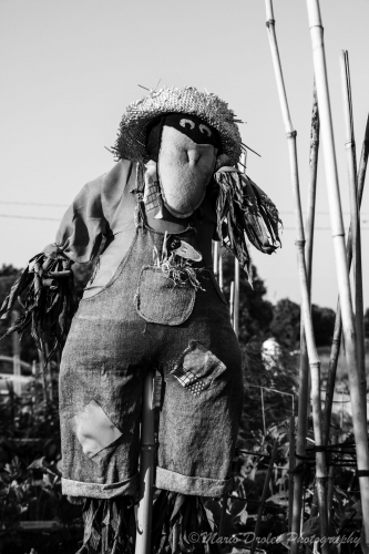 Urban garden scarecrow in black and white