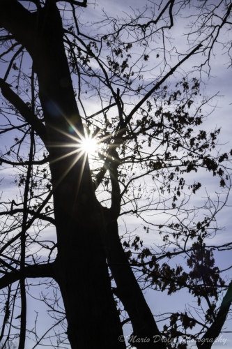 Colour photo of a sunflare behind a tree