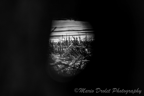 Black and white photo of a marsh through a hole in a tree trunk