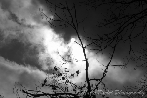 Black and white photo of the sun through the clouds