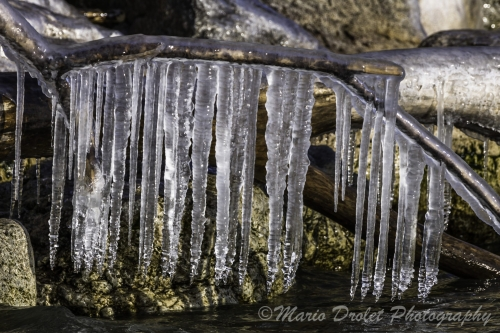 Colour photo of icicles from a branch over a lake
