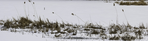 Colour photo of Rattray Marsh in the winter