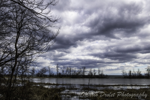 Colour photo of Rattray Marsh under a cloudy sky